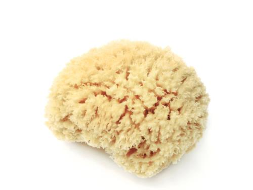 LATHER Natural Sea Wool Sponge