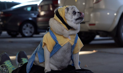 Dawn of the Minion Pug